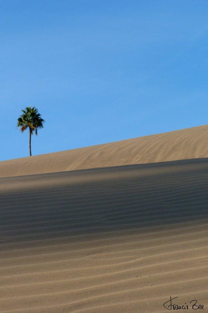 Dünenlandschaft