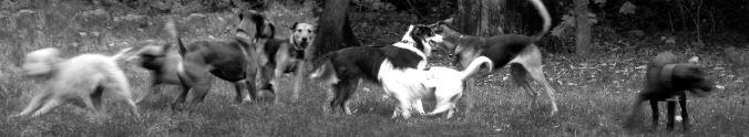 Hundewiesentreffen