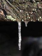 Festgefroren