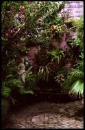 Dschungelambiente