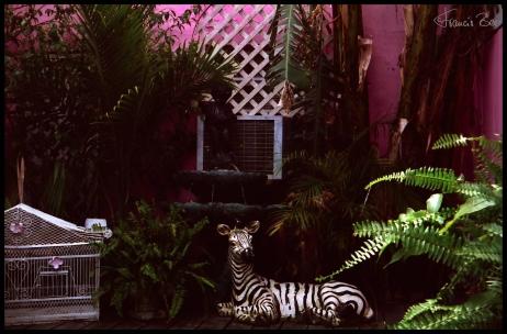 Ein Zebra neben dem Vogelkäfig unter Palmen