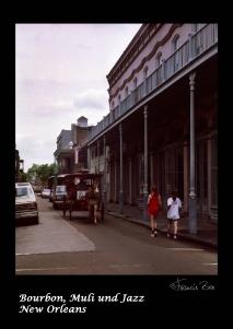 Muli mit Touristen im French Quarter